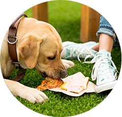 Výživa a správná funkce jater u psa