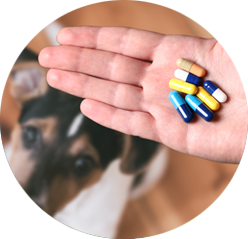 Léky pro psy a jejich zátěž pro játra