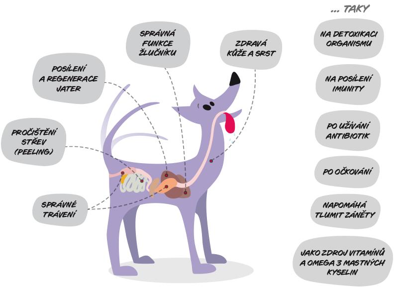 Schéma účinků pasty Goliver